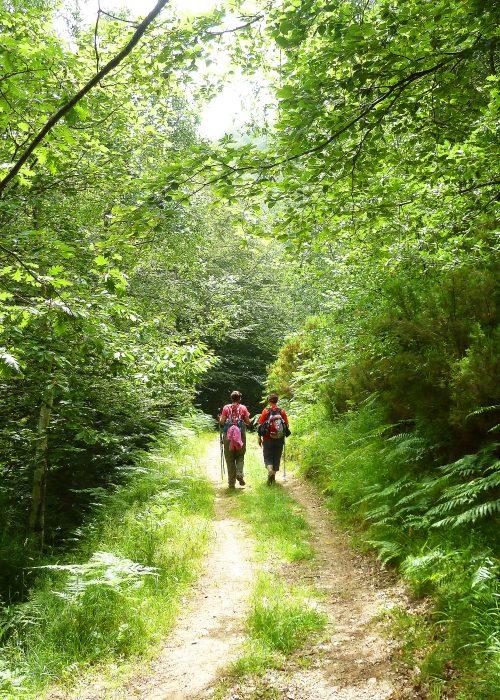 Vacaciones senderistas en la Selva de Irati. - Senderos Cordoba