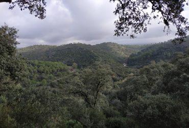 Cordobeando entre Villafranca y Adamuz. - Senderos Cordoba