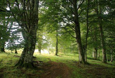 Piérdete con nosotros por el Pirineo Navarro - Senderos Cordoba