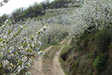 Escapada entresemana al Valle del Jerte - Senderos Cordoba