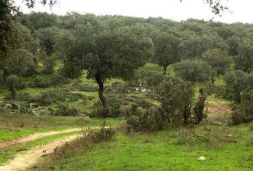 Aldea del Cerezo – Azuel, fiesta de la morcilla Azueleña. - Senderos Cordoba