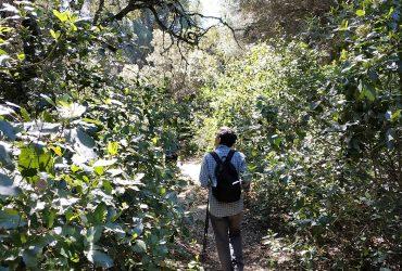 Paseo cordobeando por el bosque perdido - Senderos Cordoba