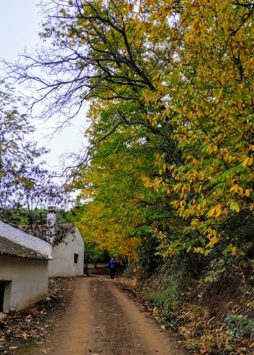 Ornitosenderismo, aves en el otoño de Valdejetas - Senderos Cordoba