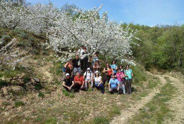 Floración del Cerezo entre semana - Senderos Cordoba
